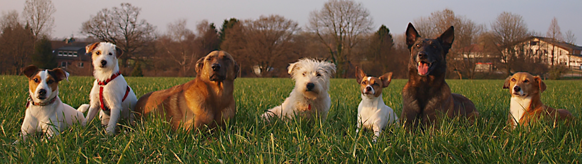 Hundeschule Wuppertal Düsseldorf